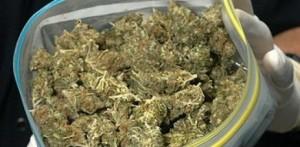 201112202128590.marihuana